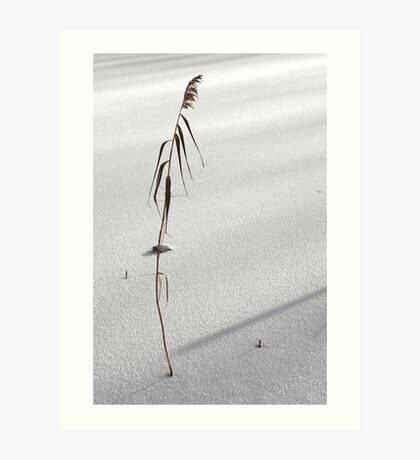 desolate reed on snow-flat Art Print