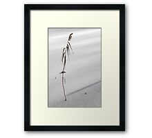 desolate reed on snow-flat Framed Print