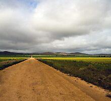 Parachilna - Light over canola fields by PeterDamo