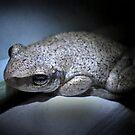 Frog Innaloo by Gryphonn