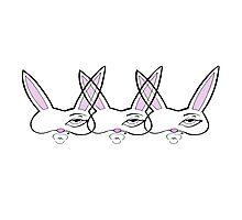 Three Rabbits Photographic Print