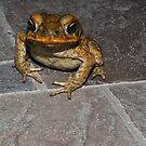 Super Frog I by Denis Molodkin