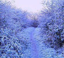 Path through the Winter Wood by sweeny