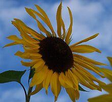 Sunflower (original) by Jonice