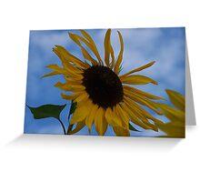 Sunflower (original) Greeting Card