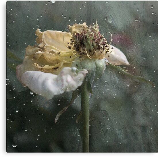 Rust 'n Roses ~ No 16 by Rosalie Dale