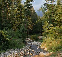 Park Rila's River by Anina Arnott