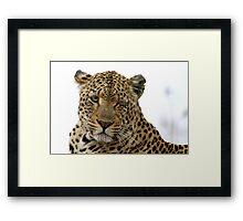 Can Leopards Wink? Framed Print