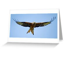 The Red Kite Greeting Card