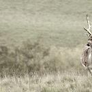 Deer at Petworth by Charlotte Jarvis