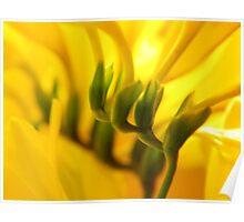 How joyful is yellow! Poster