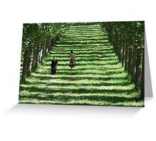 Meditation alleyway of trees Greeting Card