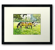Grazing horses and cows Framed Print