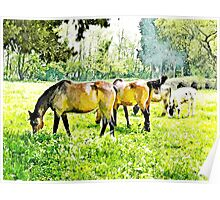 Grazing horses and cows Poster