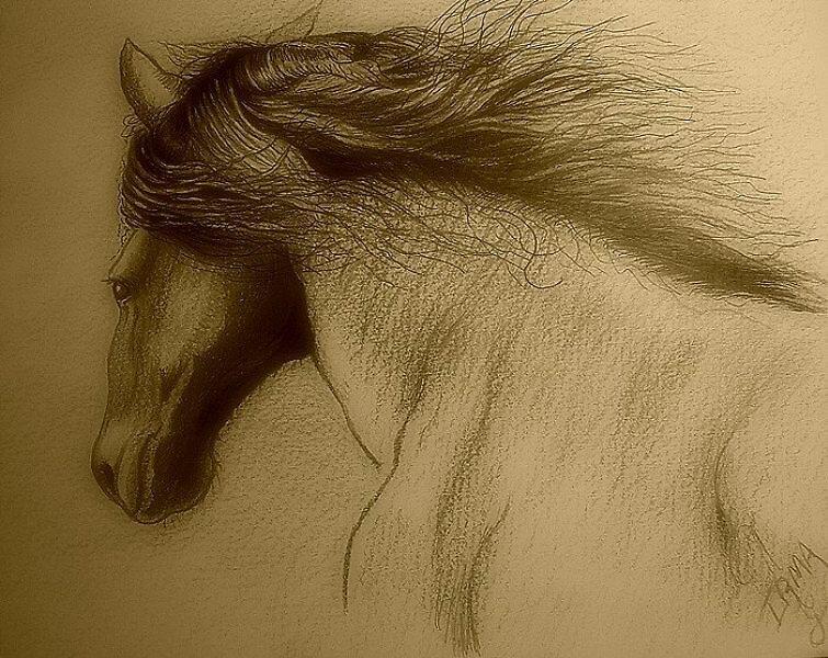 Horse Blowing Hair #3 by Noel78