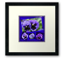 Got the Blues - Purple Pansies Collage Framed Print