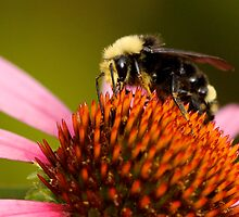 Bright-Eyed and Bushy-Tailed Pollinator of Flowers by Wolf Read