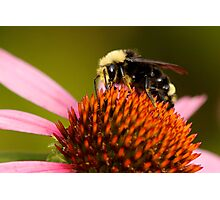 Bright-Eyed and Bushy-Tailed Pollinator of Flowers Photographic Print