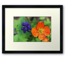 Orange and purple flower Framed Print