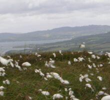 Bog Cotton Sticker