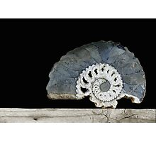 time spiral. ammonite Photographic Print