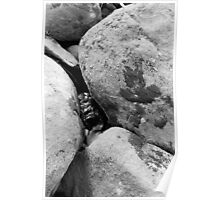 Boulders and Stream Poster