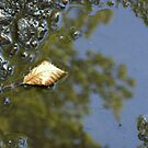 LEAF  IN  A  PUDDLE by Heidi Mooney-Hill