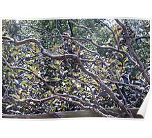 Exotic Branches Poster