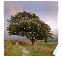 Pathway to the lonely tree Poster
