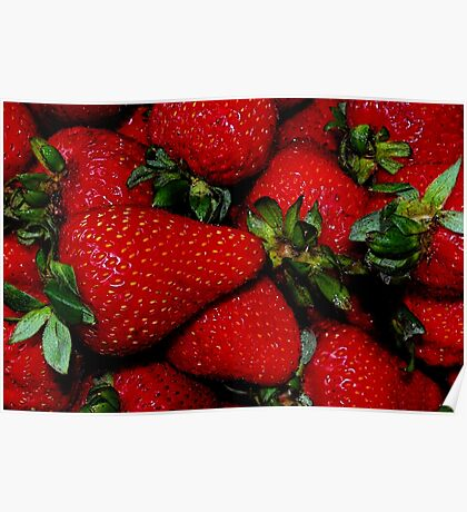 Farm Fresh Strawberries Poster