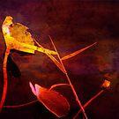 Red as Blood by Susanne Van Hulst