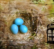 Blossoms, birdcage, eggs and nest by PhOtOgaljan