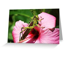 Hello Little Friend Greeting Card