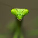 """""""Take Me To Your Leader!"""" by Tamas Bakos"""