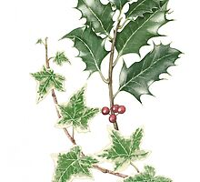 Holly and Ivy in Watercolour by Fiona Cross