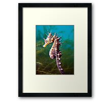 I have the crown, Therefore I am King. Framed Print