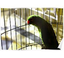 Parrot in the cage Poster