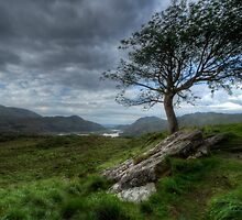 The Tree on the Hill by MarcoBell