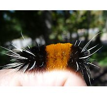 Wooly Bear © Photographic Print