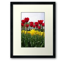 Tall Tulips Framed Print