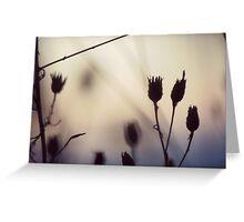 Tumble Weed Bokah Sunset Photography Greeting Card