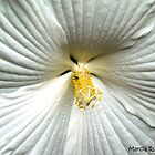 White Hibiscus by Marcia Rubin