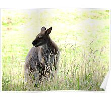 Wallaby in the Grass Poster