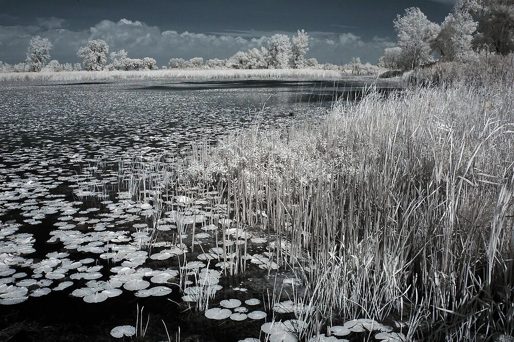 Infrared Marsh by brupert