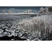 Infrared Marsh Photographic Print