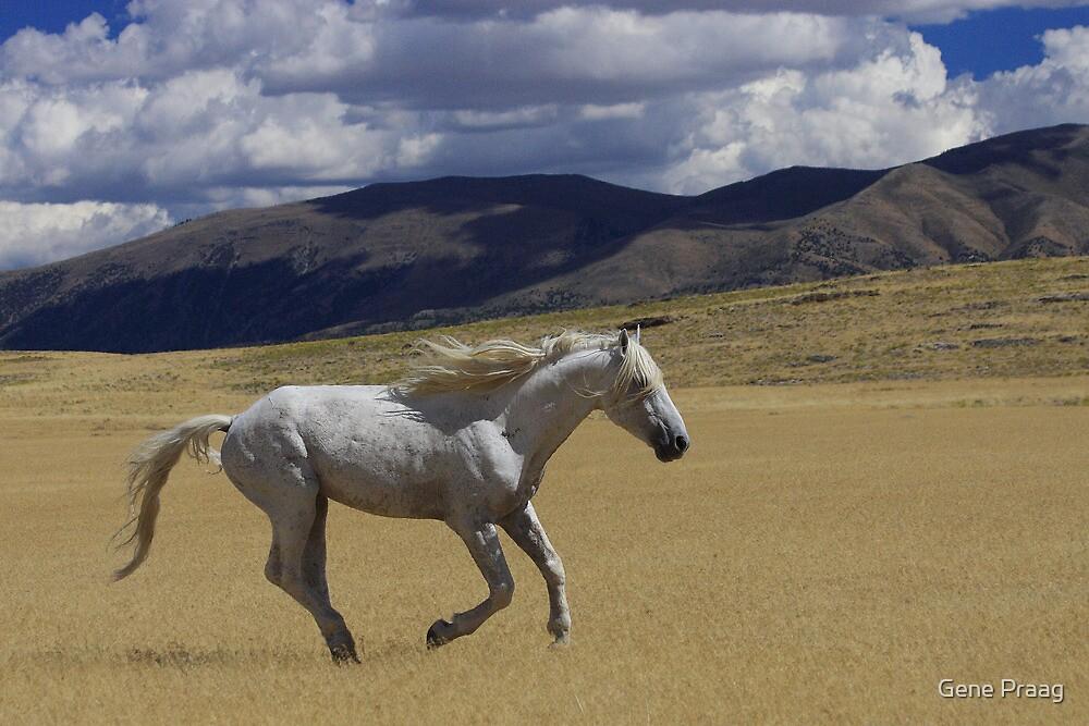 Freedom On The Run by Gene Praag