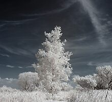 Infrared Tree by brupert