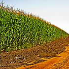 The Corn Field and Country Road by Buckwhite
