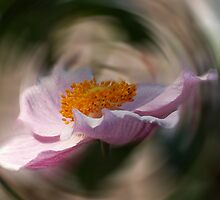 INTO A WHIRL by OlaG