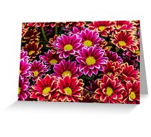 Asteraceae Vibrant Red and Pink Emotion Greeting Card